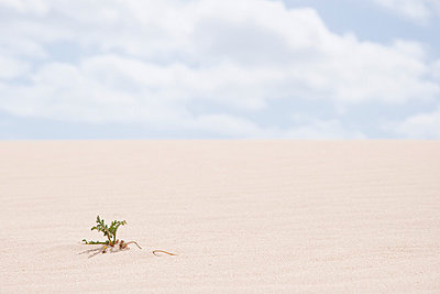 Single plant in the sand - p6460168 by gio