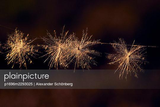 p1696m2293025 by Alexander Schönberg