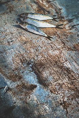 Sardine - p300m1130081f by Deyan Georgiev