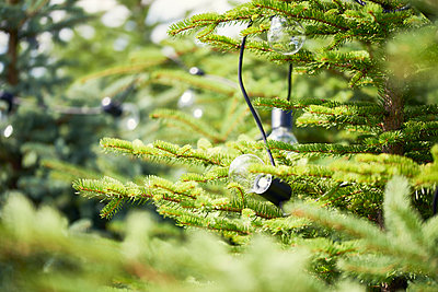 Electric lamps hanging in fir tree - p300m2012231 by gpointstudio