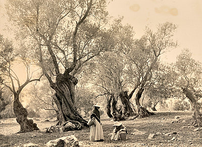 Woman picking olives in Spain - p8850191 by Oliver Brenneisen