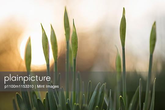 p1100m1153310 von Mint Images