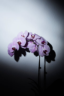 Orchid - p1149m1144494 by Yvonne Röder