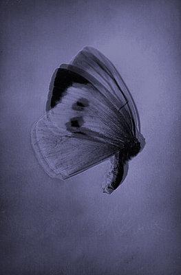 Butterfly - p1648m2228457 by KOLETZKI