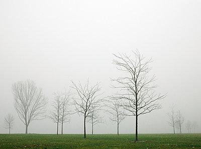 Trees shrouded in fog - p3720427 by James Godman