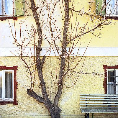 Baum im Frühling an einem Bauernhaus, Kuchl, Österreich - p1026m834365 by Alexandra Dost