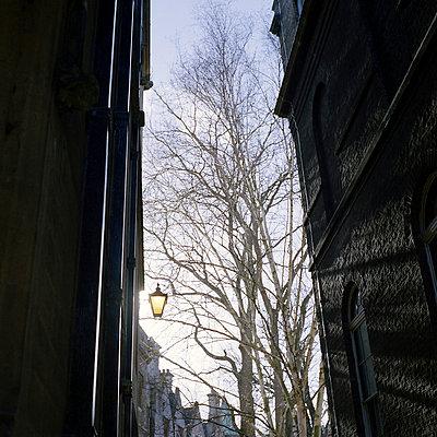 Cambridge - p1063m1132347 by Ekaterina Vasilyeva