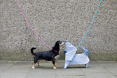 Blue origami dog and dog sniffing - p300m2012950 by Petra Stockhausen