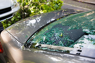 Car Rear Windshield Broken From A Fallen Tree After A Large Thunder Storm - p442m1033761 by Roderick Chen
