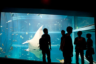 People Standing in front of Aquarium Tank - p669m806323 by Kelly Davidson