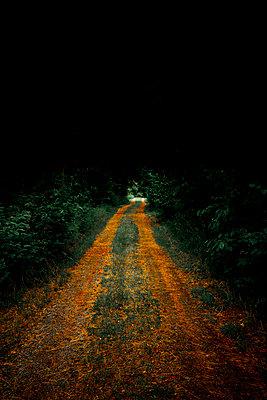 Waldweg - p248m1462780 von BY