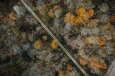 Germany, Baden-Wurttemberg, Freiburg im Breisgau, Aerial view of empty dirt road cutting through autumn forest - p300m2169995 by Studio 27