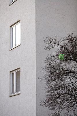 Plastiktüte im Baum - p9330073 von Stefan Hobmaier