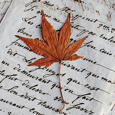 Dried maple leaf placed on letter  - p685m1045483 by Lena Kah