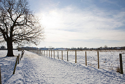 Path and field covered in snow - p92411744f by Elizabeth Ellen