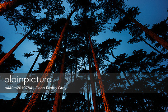 p442m2019784 von Dean Blotto Gray