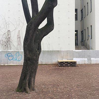 Einzelner Baumstamm in einem Hinterhof, Wien - p1401m2229889 von Jens Goldbeck