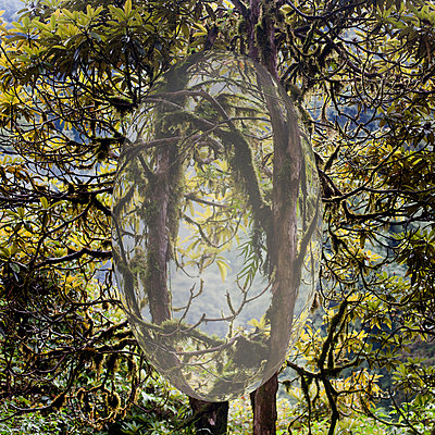nature illusion - p534m2121979 by Susanna Ferran Vila