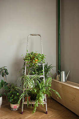 Folding ladder used as shelve for home plants in urban jungle interior - p1166m2189912 by Cavan Images