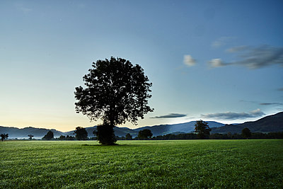 Single tree in a field at sunrise - p1312m2182147 by Axel Killian