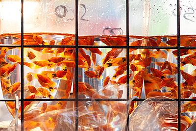 Fish in plastic bags on market in Hong Kong - p795m2186120 by JanJasperKlein