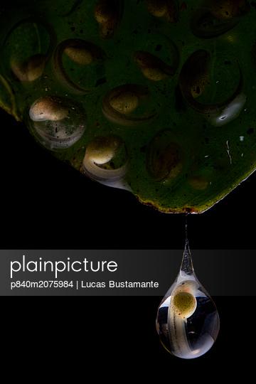 p840m2075984 von Lucas Bustamante