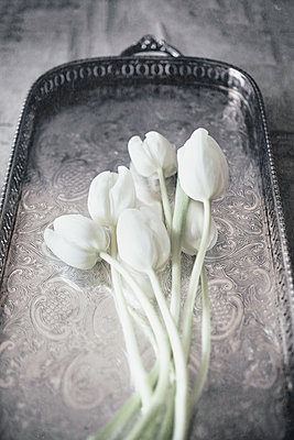 White tulips on vintage tray. - p1470m1539187 by julie davenport