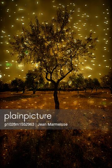 p1028m1552963 by Jean Marmeisse