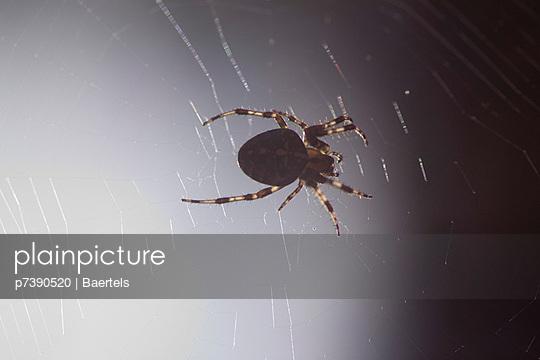 Spinne - p7390520 von Baertels