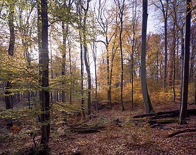 In a forest - p1016m792607 by Jochen Knobloch