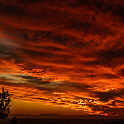 Tree against dramatic sunset sky - p1427m2163627 by Steve Smith