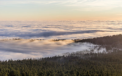 Germany, Saxony-Anhalt, Harz National Park, atmospheric inversion  in the evening - p300m1059128f by Patrice von Collani