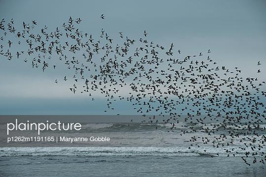 Flock of Birds Oregon Coast