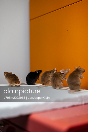 Padded mice - p795m2222965 by JanJasperKlein