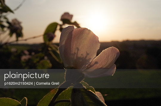 p1620m2193424 by Cornelia Greil