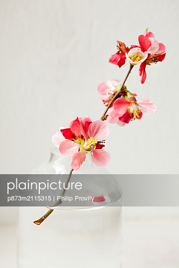 Flower - p873m2115315 by Philip Provily