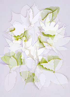 Blättercollage - p4150632 von Tanja Luther