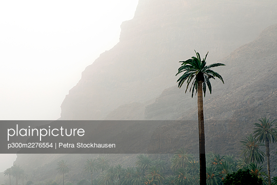 Palm tree in front of mountain - p300m2276554 by Petra Stockhausen
