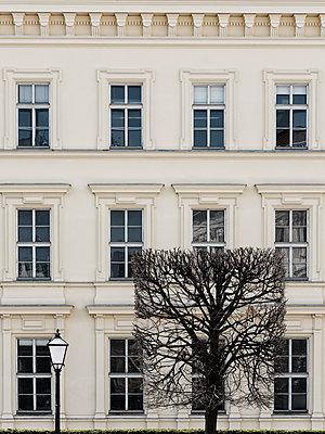 Quadratischer Baum und Laterne vor einem Gebäude - p1383m2100695 von Wolfgang Steiner