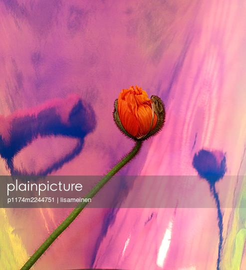 Blume - p1174m2244751 von lisameinen