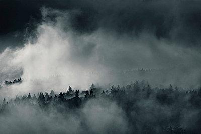 Forest in mist, Bayerisch Eisenstein, Bavaria, Germany - p92411149 by David Pinzer
