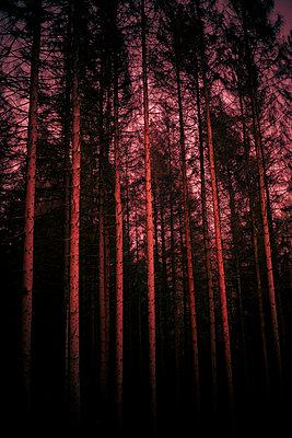 Red forest - p1621m2260183 by Anke Doerschlen