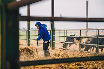 Young male farmer spreading straws in barn - p300m2242184 by Aitor Carrera Porté