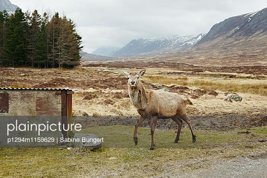 Highlands - p1294m1159629 von Sabine Bungert