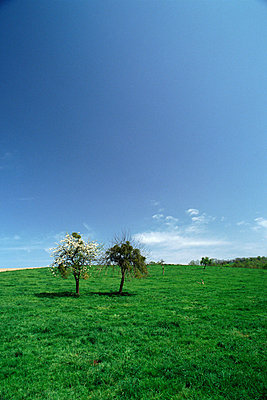 Two trees in a field - p62316761f by James Hardy