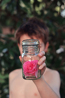 Boy Holding Out Pink Rose in a Jar - p1617m2191728 by Barb McKinney