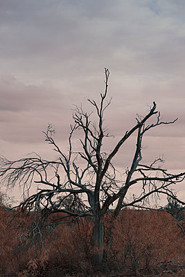 Dead Tree in a Field with Cloudy Skies - p1617m2237811 by Barb McKinney