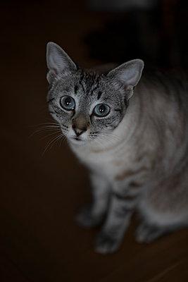 Cat - p445m1515114 by Marie Docher