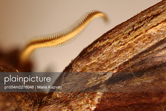 Macro Butterfly - p1054m2278048 by Maria Kazvan