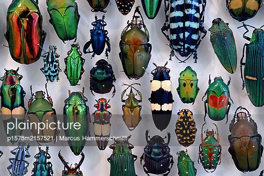 Krabbeltiere - p1578m2157521 von Marcus Hammerschmitt